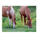 Grazing Horses Postcard