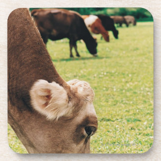 Grazing Jersey Cow Beverage Coaster