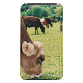 Grazing Jersey Cow iPod Touch Case