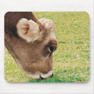 Grazing Jersey Cow Mouse Pad