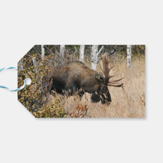 Grazing Moose Gift Tags
