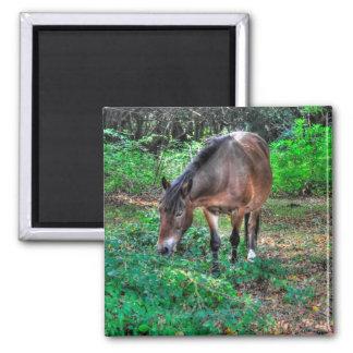 Grazing New Forest Pony Wildlife Magnet