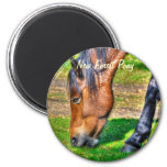 Grazing New Forest Pony Wildlife Magnets