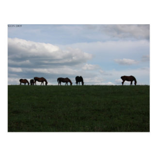 Grazing on the hill postcard