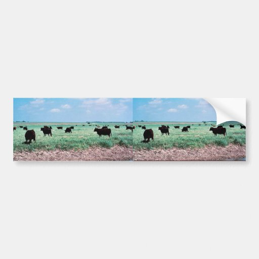 Grazing on Wetland (cows) Bumper Stickers