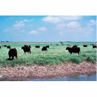 Grazing on Wetland (cows) Acrylic Cut Out