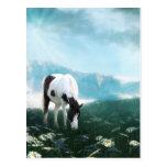 Grazing paint horse postcard