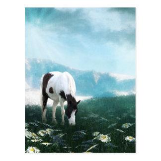 Grazing paint horse postcards