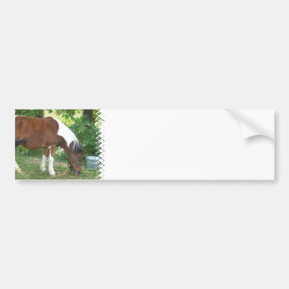 Grazing Pony  Bumper Stickers