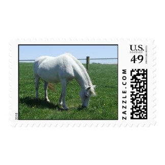 Grazing Pony Mare Stamp
