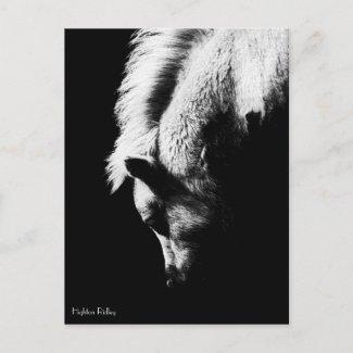 Grazing Pony - postcard postcard