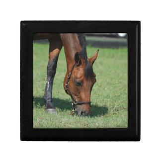 Grazing Quarter Horse Gift Box