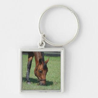 Grazing Quarter Horse Key Chain
