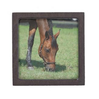 Grazing Quarter Horse Premium Gift Box