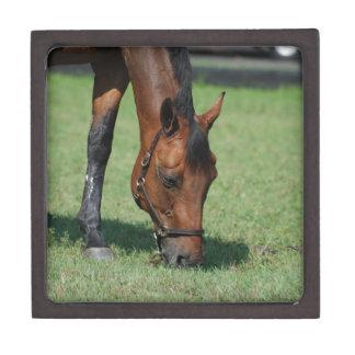 Grazing Quarter Horse Premium Jewelry Boxes