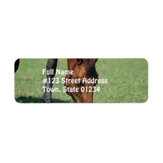 Grazing Quarter Horse Return Address Label