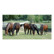 Grazing Quarter Horses Card