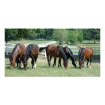 Grazing Quarter Horses Custom Photo Card