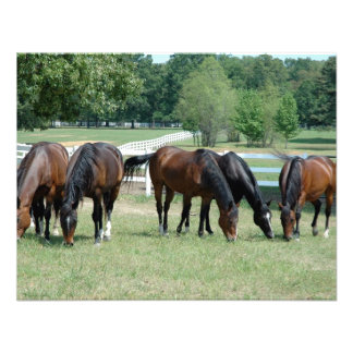 Grazing Quarter Horses Announcement