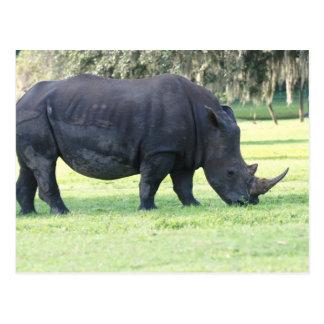 Grazing Rhino Postcard