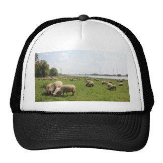 Grazing Sheep by the Rhine Trucker Hat