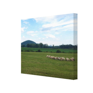 Grazing Sheep Canvas Print