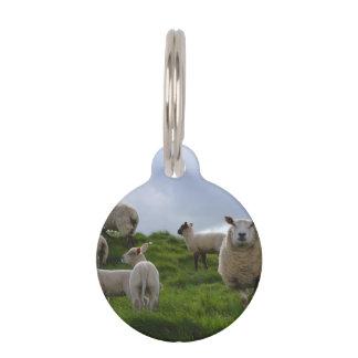 Grazing Sheep Pet Name Tag