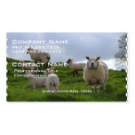 Grazing Sheep Double-Sided Standard Business Cards (Pack Of 100)
