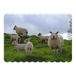 Grazing Sheep 5x7 Paper Invitation Card