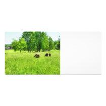 Grazing Sheep Rack Card