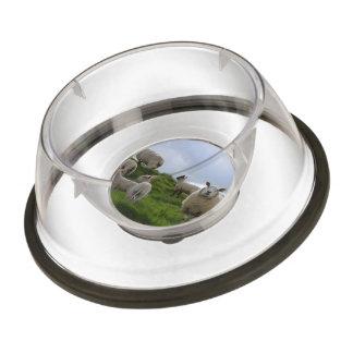 Grazing Sheep Pet Bowl