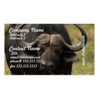 Grazing Water Buffalo Business Cards