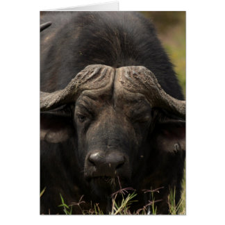 Grazing Water Buffalo  Greeting Card