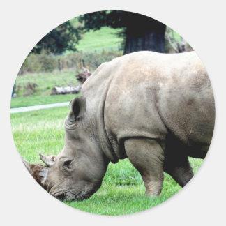 Grazing White Rhino Stickers