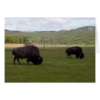 Grazing Wood Bison; Customizable Card