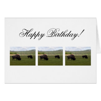 Grazing Wood Bison; Happy Birthday Card