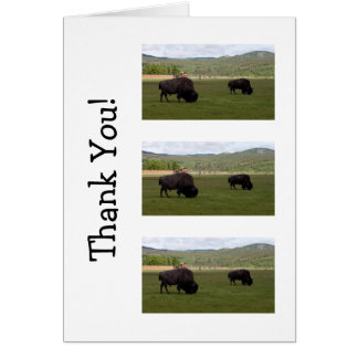 Grazing Wood Bison; Thank You Card