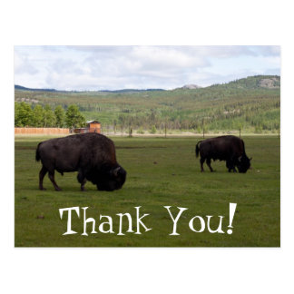Grazing Wood Bison; Thank You Postcard