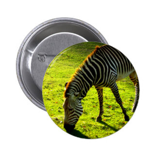 Grazing Zebra Pins