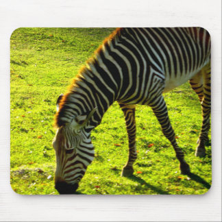 Grazing Zebra Mouse Pad