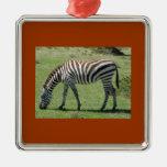 Grazing Zebra Ornaments