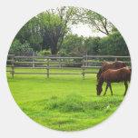 grazingpasture.jpg round sticker