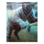 Great Adventure Tiger Personalized Flyer