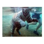 Great Adventure Tiger Postcard