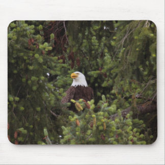Great American Bald Eagle watching over the nest Mouse Pad