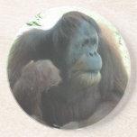 Great Ape Coasters