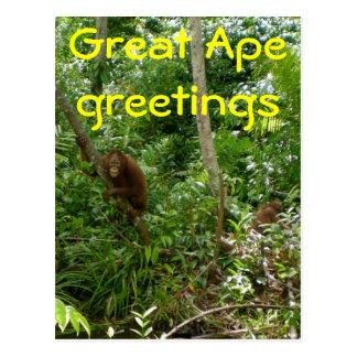Great Ape Friends Post Card