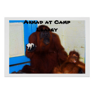 Great Ape Mother at Camp Leakey Poster