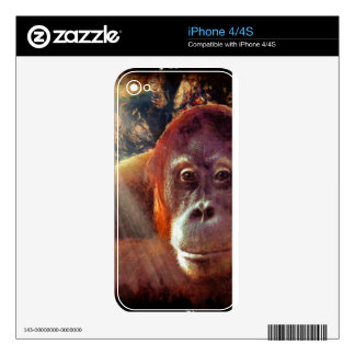 Great Ape Orangutan Wildlife Animal-Lovers Skins For The iPhone 4