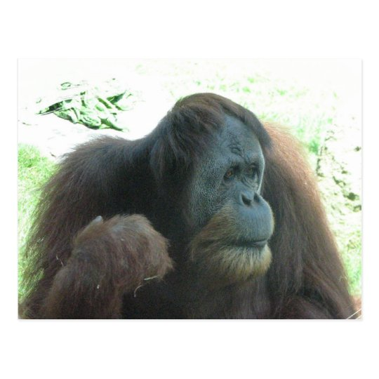 Great Ape Postcard